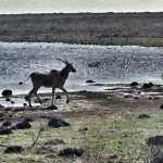 Attraction: De Hoop Nature Reserve