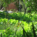 Very green garden