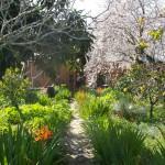 Pathway into garden